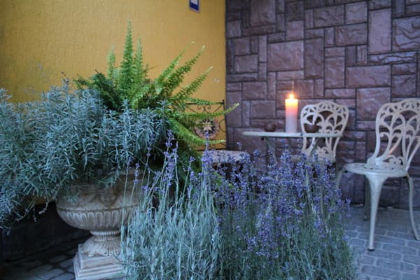 Hostel Lavanda, Pustomyty: photo, prices, reviews