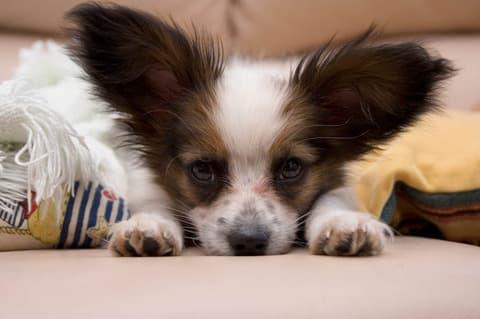 Отдых в Карпатах с собакой